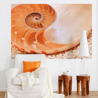 Φωτοταπετσαρία τοίχου Θαλάσσιο σαλιγκάρι (sea snail) 184x127cm