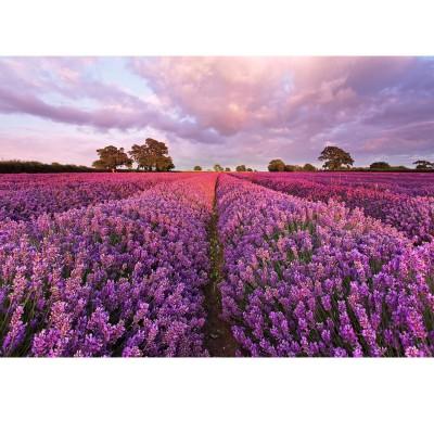 Φωτοταπετσαρία τοίχου Λεβάντες (lavender) 184x127cm