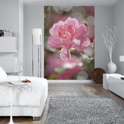 Φωτοταπετσαρία τοίχου Ροζ λουλούδι (flowers) 184x254cm