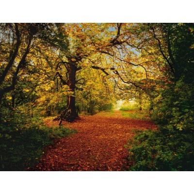 Φωτοταπετσαρία τοίχου Φθινόπωρο στο Δάσος (φύση) 388x270cm