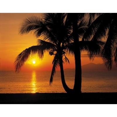 Φωτοταπετσαρία τοίχου Komar 8-255 Palmy Beach Sunrise  Φύση 368x254cm