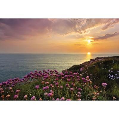 Φωτοταπετσαρία τοίχου Τοπίο με Μώβ Λουλούδια (φύση) 368x254cm