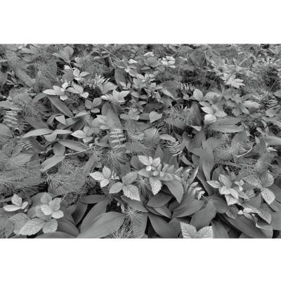 """Φωτοταπετσαρία τοίχου """"Το δάπεδο του δάσους"""" (flowers) 368x254cm"""