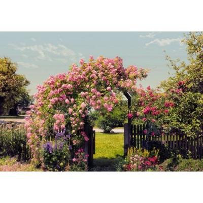 Φωτοταπετσαρία τοίχου Κήπος με Τριαντάφυλλα (flowers) 368x254cm