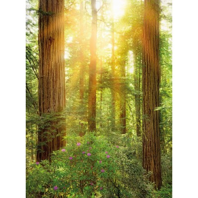 Φωτοταπετσαρία τοίχου Redwood-Πάρκο στην Καλιφόρνια 184x248cm