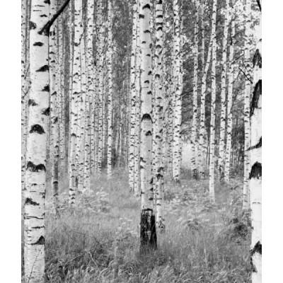 Φωτοταπετσαρία τοίχου Απρόμαυρο Δάσος 368x248cm