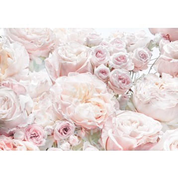"""Φωτοταπετσαρία τοίχου Φλοράλ Komar 8-976 """"Spring Roses"""" 368x254cm"""