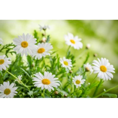 Ρόλερ - Ρολοκουρτίνα Σχέδιο Φύση - Λουλούδια - Floral 134