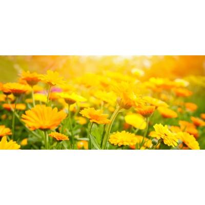 Ταπετσαρία Φύση - Λουλούδια - Floral 138