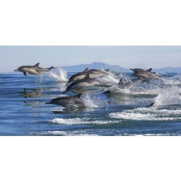 Ταπετσαρία Ζώα 76 Δελφίνια