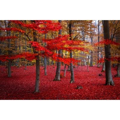 Ρόλερ - Ρολοκουρτίνα Σχέδιο Φύση - Λουλούδια - Floral 83 Φθινόπωρο