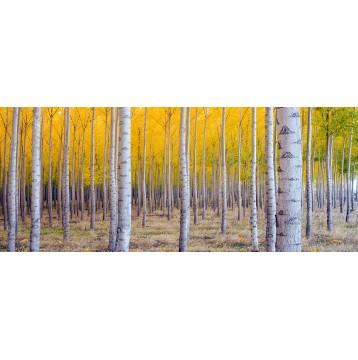 Ταπετσαρία Φύση - Λουλούδια - Floral 166 Κίτρινο δάσος